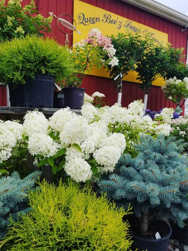 Queen Bee'z Lawn and Garden in Prior Lake, Minnesota, your best local garden center, green house and nursery, offers a wide variety of both annual and perennial decorative flowering plants.
